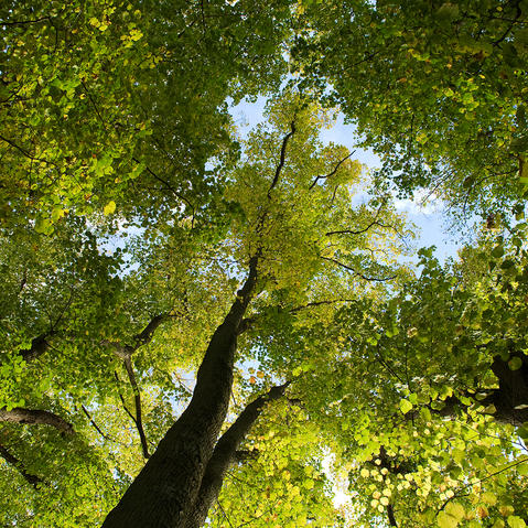 arbres foret