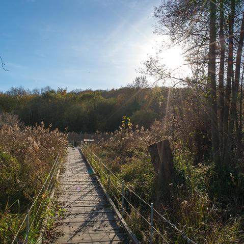 marais et sentier de maincourt