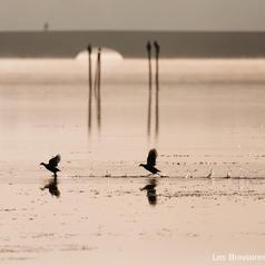 etang de hollande oiseaux