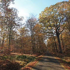 foret_rambouillet_automne