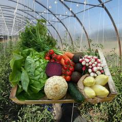 legumes maraicher agricole