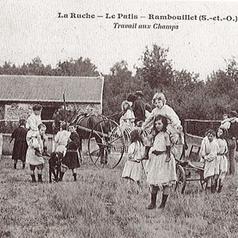 Ruche Rambouillet