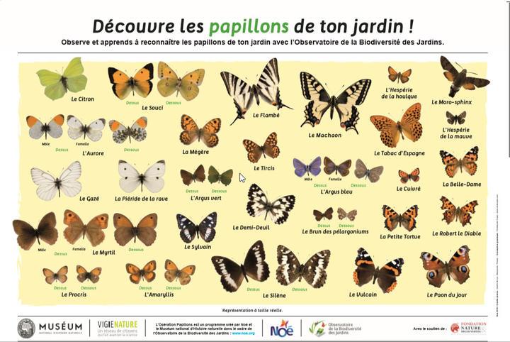 2020-04-21-13_23_28poster-papillon.jpg