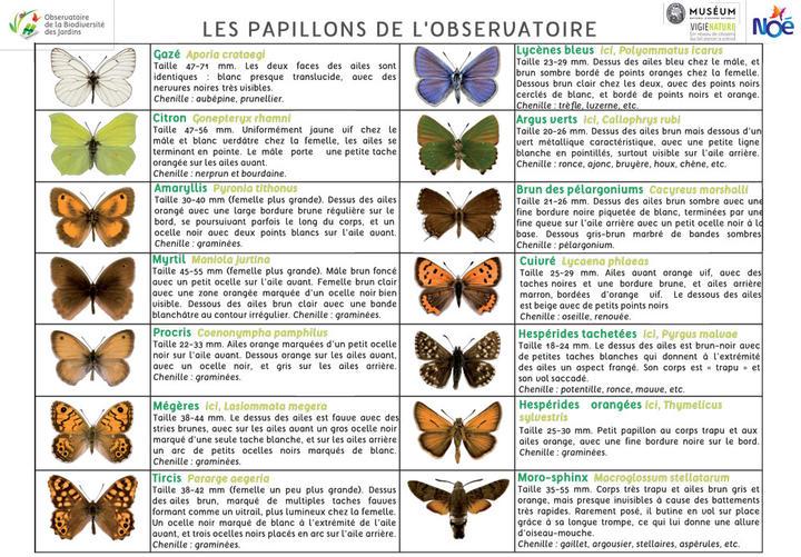 2020_pdf_fiche_identification_papillons.jpg