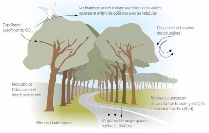 Alignements d'arbres et sécurité routière