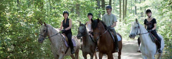 cheval Vallée de Chevreuse