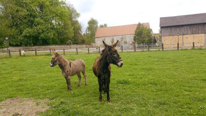 parc_animalier_janvry