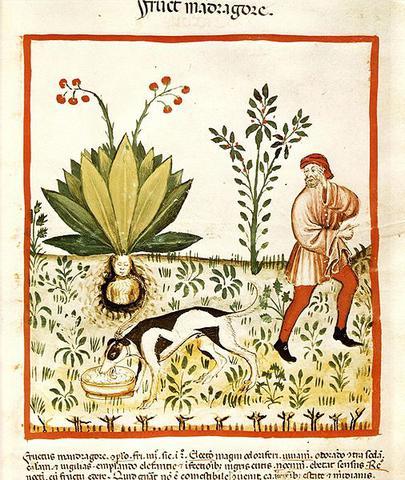 plantes medievales