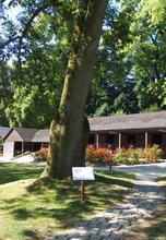 Arboretum de la Geneste