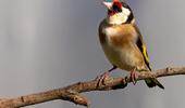 oiseau l'hiver
