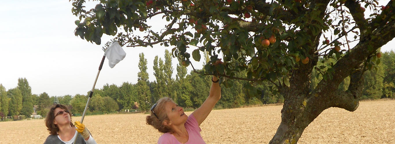 fruit du voisin recolte
